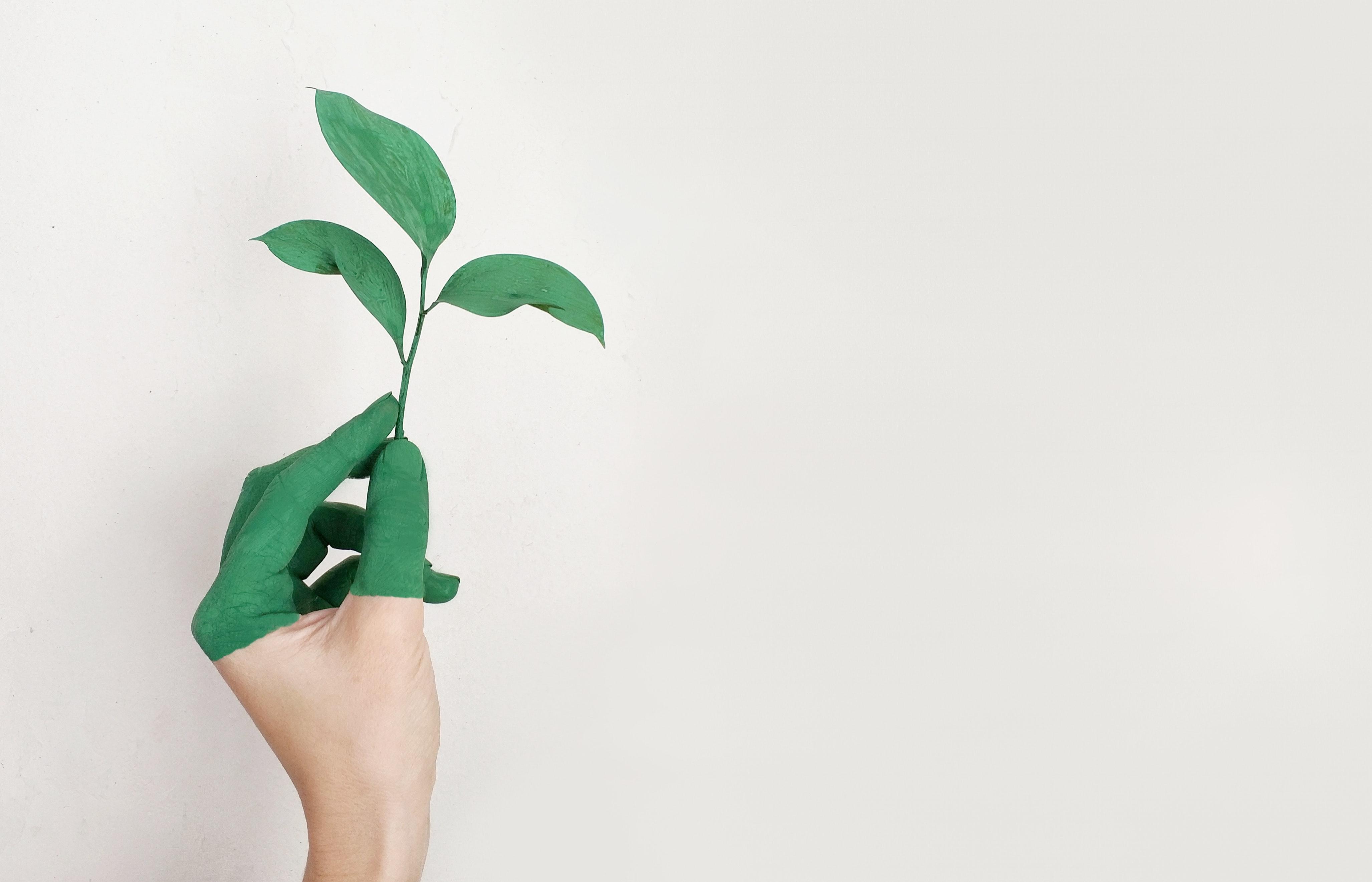 Sustentabilidade: 7 Práticas Ecológicas Para o Seu Restaurante