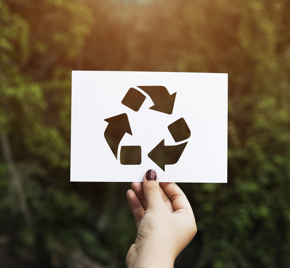 Embalagens Ecológicas: o que são e por que você deve investir nelas